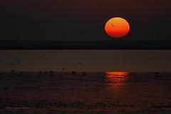 Sonnenuntergang an der Nordsee (Susanne Weber) Tags: himmel lunar sunset sonnenuntergang northsea nordsee germany deutschland norddeutschland meer ozean strand sand wasser vogel vögel natur sundown