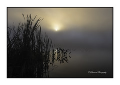 Lilly Pads and Reeds (windshadow2) Tags: fog lillypad nikon reeds sunrise lake water reflections sun morning foggy
