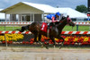 "2017-05-25 (38) r3 Wesley Ho on #1 Dirty Laundry (JLeeFleenor) Tags: photos photography md maryland marylandracing marylandhorseracing pimlico baltimore jockey جُوكِي ""赛马骑师"" jinete ""競馬騎手"" dżokej jocheu คนขี่ม้าแข่ง jóquei žokej kilparatsastaja rennreiter fantino ""경마 기수"" жокей jokey người horses thoroughbreds equine equestrian cheval cavalo cavallo cavall caballo pferd paard perd hevonen hest hestur cal kon konj beygir capall ceffyl cuddy yarraman faras alogo soos kuda uma pfeerd koin حصان кон 马 häst άλογο סוס घोड़ा 馬 koń лошадь wesleyho ho"
