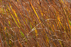 Coyote Hills Grass (_quintin_) Tags: coyotehills fremont california grass