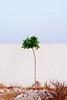 Life itself, you are the one. (Saâd Jebbour) Tags: tree bush vertical digifilm one lifeitself youaretheone georgeharrison vsco nikon 50mm sidelabed harhoura temara rabat morocco summer 2017 saadjebbour saadjebbourcom