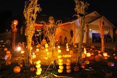 IMG_6677 (Clown Guy) Tags: pumpkins pumpkinpatch jackolanterns halloween halloween2017 halloweenhouse halloweenyard halloweenyarddecor halloweenyardhaunt clowncourt homehaunt homehaunter haunter