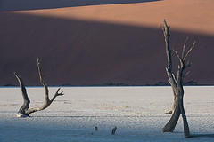 Deadvlei Sunrise (Palnick) Tags: deadvlei desert namibia sand sossusvlei namib africa tourism travel landscape dry dune nature tree dead sunrise arid african park red scenery hot sky orange vlei drought wilderness clay natural scenic national pan outdoors namibnaukluft acacia outdoor background environment wild blue adventure naukluft camelthorn desolate skeleton exploration valley salt light holiday