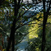 Chemung River watershed in Chemung County, N.Y. - Forested land lines the Chemung River in Chemung County, N.Y., on Sept. 30, 2017. (Photo by Will Parson/Chesapeake Bay Program)