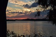 Storm brewing (Dreaming of the Sea) Tags: sunset water clouds sky bluesky burnettriver bundaberg gumtree redsunset reflections landscape nikon d7200 sun tamronsp2470mmf28divcusd queensland australia dof 1500v60f