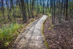 Gray's Creek Conservation Area (Richard Pilon) Tags: grayscreek autumn naturetrail fall nature grayscreekconservationarea canon ontario powershot trail conservationarea