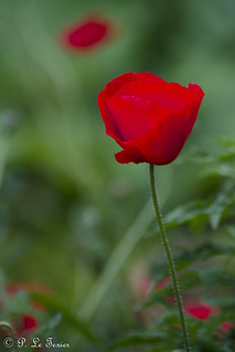 Fleurs 013