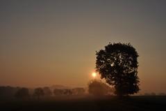 Wenn der Tag erwacht - Explore 3.11.2017 (Uli He - Fotofee) Tags: ulrike ulrikehe uli ulihe ulrikehergert hergert burghaun nikon nikond90 fotofee plätzer meinweg nebel november morgensonne sonne sonnenlicht warmeslicht sonnenschein bäume feld felder licht schatten