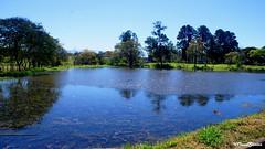A lake on the countryside - Um lago no campo (VCLS) Tags: vcls brasil brazil pinda landscape lago lagoa lagoon lake árvore água water tree roça valmir valedoparaiba vale foto fotografia picture
