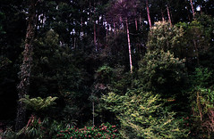 Beira do mato (terencekeller) Tags: pentax k1000 superia xtra 400 35mm clubeprimavera clube primavera natureza flora paraná almirantetamandaré
