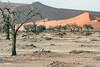 Sossusvlei (Guy Goetzinger) Tags: natur wüste desert oryx sossusvlei namibia africa sand animal tree nature nikon goetzinger morning landscape antilope sable mammal tier säugetier wildlife afrique namibie travel voyage natinal park