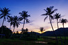 Coco-nut trees in Vietnam countryside (minhty0602) Tags: coconuttree coconut trees plant asianplant asiannuture vietnam vietnamcountryside nature sunset twilight silhouete countryside hometown