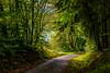 17-10-04 spess weglicht blat grün dsc08502 (u ki11 ulrich kracke) Tags: durchblick kurve licht nah spessaert weg