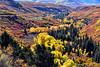 THE VALLY BELOW (Aspenbreeze) Tags: colorado aspens autumn aaspengold aspentrees trees valey mountains conifirs nature fallseason road bevzuerlein aspenbreeze moonandbackphotography