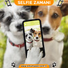 selfie dogs (emamapet41) Tags: animal cam camera canine cell cheerful close companion couple cute date day digital dog embrace friend friendship fun funny happiness happy honeymoon humor jackrussell joke lens love lovers mobile pet phone photo photograph photographer photography picture portrait puppy romance self selfie shot smartphone snapshot take terrier together valentine