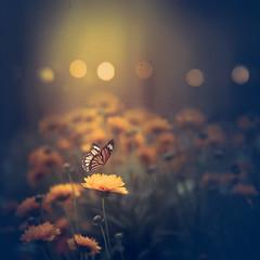 Fantasy garden (Ro Cafe) Tags: garden flowers butterfly yellow light bokeh textured shadows nikkor2470f28 nikond600
