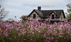 must love pink (Dotsy McCurly) Tags: pink cosmos flower blue sky house park nature beautiful nj newjersey nikond750 tamron18400mmf3563
