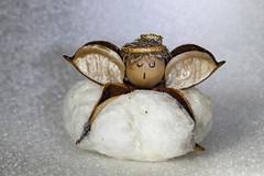 Macro Mondays : Souvenir (erichudson78) Tags: macromondays macro canonef100mmf28lmacroisusm canoneos6d souvenir angel ange louisiana cotton coton 7dwf