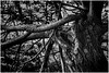 Aduarderzijl (Schnarp) Tags: aduarderzijl reitdiep groningen natuur nature natur dijk rivierdijk river rivier hoogeland gemeentewinsum hdr pentaxk10d schnarp