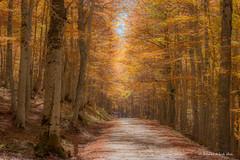 Va in scena l'autunno - She goes in the autumn (antoninao) Tags: voltigno abruzzo laquila ngc canon 5dmarkiii antonina orlando