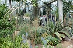 Kew Gardens -  September 2017 (ericmiles47) Tags: kew botanicgarden cactii