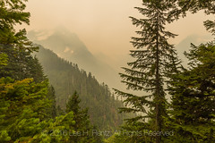 Glacier Creek Valley Filled with Smoke in Olympic National Park (Lee Rentz) Tags: elklake glaciermeadows hoh hohrainforest hohriver hohrivertrail olympicmountains olympicnationalpark olympicpeninsula pacificnorthwest washington washingtonstate america bad dingy distant fire fires forest forestfire haze hazy hike hiking landscape nature northamerica northwest poor route smoke smoky trail trees unitedstates usa view visibility wild wildfire