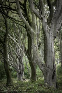 Northumberland Woodland.