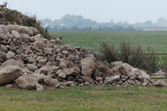 eiszeit (farbstich.) Tags: vorpommern endmoräne terminalmoraine westernpomerania haufen steine