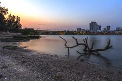 Tree (S♡C) Tags: sunrise tree river rivreside shore