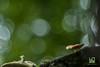 MAGIA (Lace1952) Tags: bosco sottobosco fungo sfocato bokeh poesia favola magia panasoniclumix micro4terzi