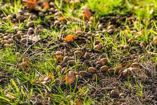 Autumn - Herfst