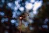 A case of crucifixion? (stokeyouth1) Tags: nature natural bokeh flora floraandfauna stokeyouth1 staffordshire nikon d7100 nikond7100 micronikkor60mm28 macro wildlife whitelippedsnail cepaeahortensis cowparsley consall consallforge consallnaturepark churnetvalley stokeontrent caldoncanal woodland snail staffordshiremoorlands summer summery