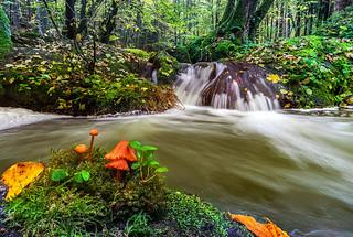 Mushroom And Stream
