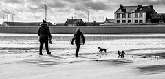 Beach walk. (CWhatPhotos) Tags: cwhatphotos clouds cloud sky above skies olympus omd em10 digital camera photographs photograph pics pictures pic picture image images foto fotos photography artistic that have which with contain beach onthebeach walk walkers dogs sand seatoncarew seaton carew silhouette silhouettes littledoglaughedstories littledoglaughednoiret