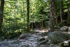 Val Verzasca (andrea.prave) Tags: switzerland svizzera suiza suisse schweiz スイス швейцария سويسرا 瑞士 cantonticino tisìn tessin valleverzasca brione verzasca maldivemilanesi woods