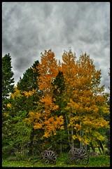 (CTfotomagik) Tags: wagon wheels autumn fall colors gloom overcast leaves country aspens trees nature explore foliage