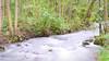 Creek (phagileo) Tags: nikond3300 samyang35mmf14 nature 35mm green flowing water wildlife germany europe river outdoor autumn