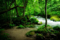 Forest Beach (samstandridge) Tags: japan forest water beach stream river nihon oirase aomori sam standridge sony alpha 6000 a6000 adventure asia woods travel trail trees tree