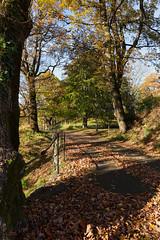 Strømsbugård, Arendal (Øyvind Bjerkholt (Thanks for 51 million+ views)) Tags: path trail strømsbu gård arendal norway autumn colour vivid daylight landscape canon hdr beautiful trees