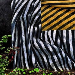 like a crushed zebra (losy) Tags: zebra stripes weeds abstract losyphotography