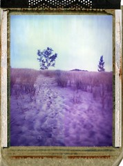 (er_code_blue) Tags: polaroidweek film 4x5 largeformat 59 polaroid analog instant expired crowngraphic graflex