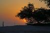 Sun setting behind the Tree of Life, Bahrain (Andrey Sulitskiy) Tags: bahrain