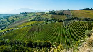 Collina Marchigiana - Offida - Ascoli Piceno