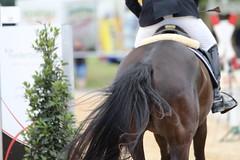 _MG_6061 (dreiwn) Tags: ridingarena reitturnier reiten reitplatz reitverein reitsport ridingclub equestrian showjumping springreiten horse horseback horseriding horseshow pferdesport pferd pony pferde tamronsp70200f28divcusd
