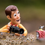 Woody the Toy Photographer thumbnail