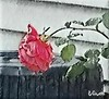 A ROSE BENDS IN THE RAIN (Visual Images1 (Thanks for over 4 million views)) Tags: vince rose rain pink