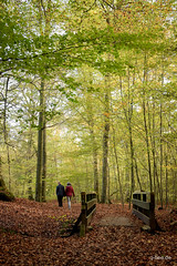 Through the woods (Q-BEE) Tags: allerheiligen trees spaziergang herbst woods autumn leafs wood wald natur nature