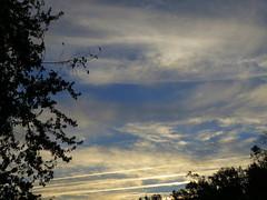 Morning Sky. (dccradio) Tags: lumberton nc northcarolina robesoncounty outdoors outside nature natural morning goodmorning nikon coolpix l340 bridgecamera sky clouds contrail morningsky interesting bluesky sunlight sunrise tree trees foliage
