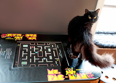 Happy Caturday! (kirstiecat) Tags: pacman arcade catcade thecatcade chicago cat chat gato blackcat caturday feline purr meow catwoman catwomen rescue