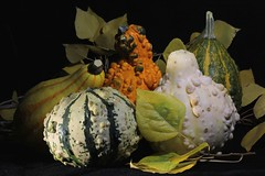 Prepare for me a pleasing gourd (SolanoSnapper) Tags: werehere tmi circlesovals blackbackground 6ws fallcolor autumn gourd stilllife squash